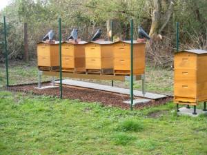 Bienenstand
