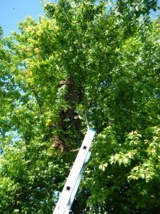 Schwarm im Baum